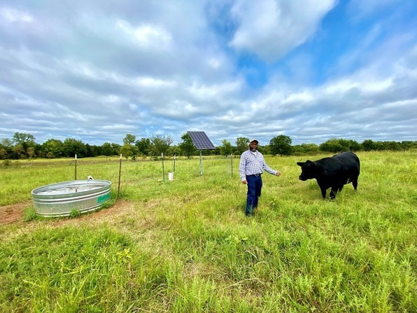 image of man in field with cow