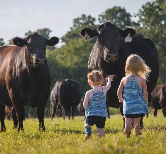 two young girls with cows